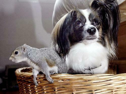 Собака и бельчонок. Фото
