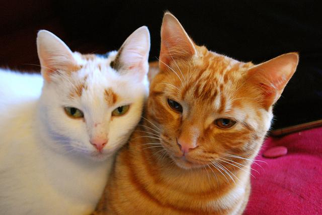 Семейное кошачье счастье. Фото