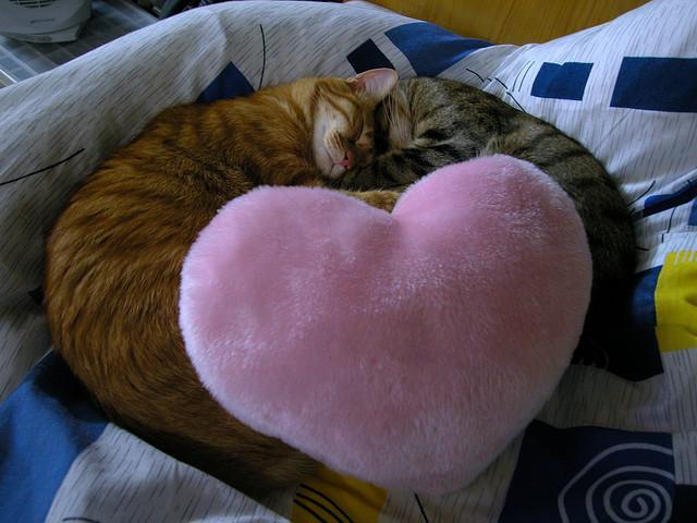 Одно сердце на двоих. Фото