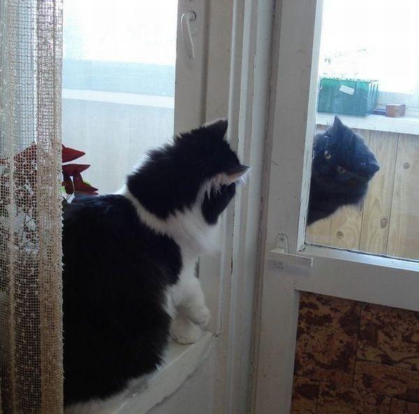 Кошачьи свидания через стекло. Фото