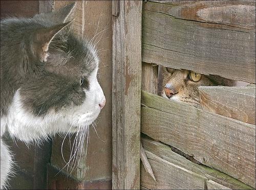 Тайные кошачьи встречи. Фото