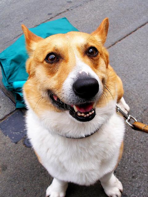 Счастливая собачка. Фото