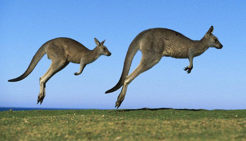 Из зоопарка под Франкфуртом сбежали три кенгуру.  Как сообщает Associated Press, инцидент...