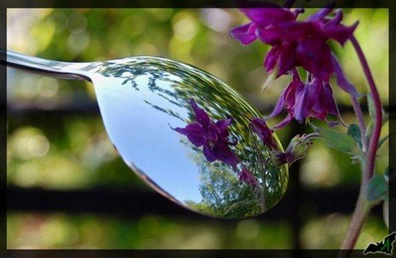 Отражение цветка в ложке. Фото