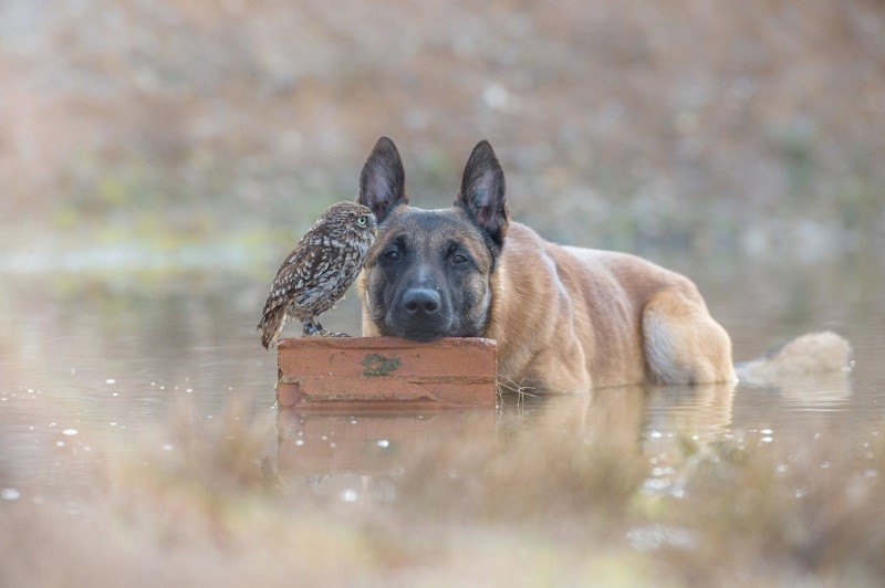 Дружба собаки и совы. Фото