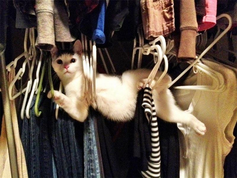 Коты-ниндзя. Фото