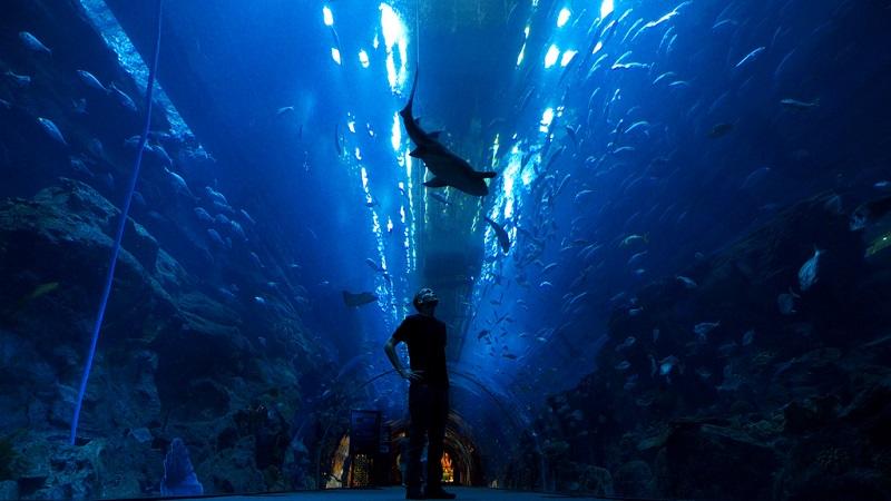 Крупнейший в мире аквариум в ТРЦ Дубай Молл, ОАЭ. Фото