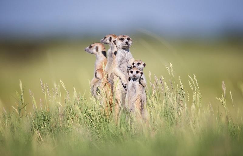 Маленькие африканские зверьки