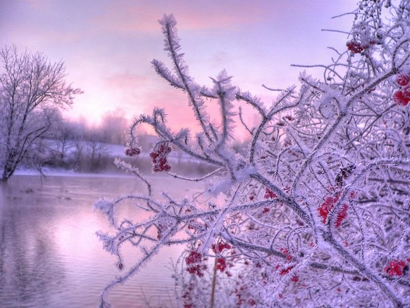Красивые зимние фото. Природа покрытая инеем