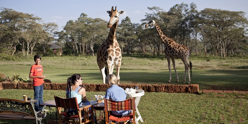 Giraffe print bathroom accessories