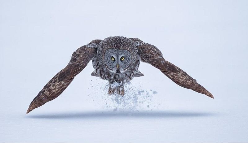 Животные в снегу. Фото