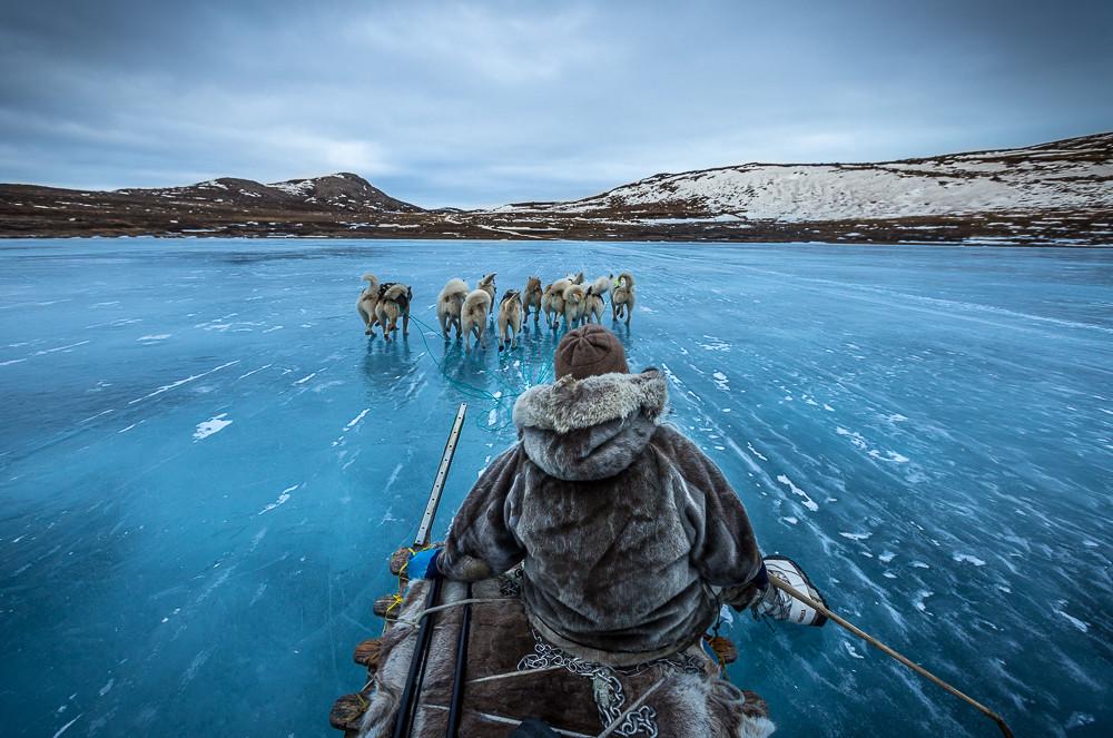 Собачья упряжка в Гренландии. Фото дня
