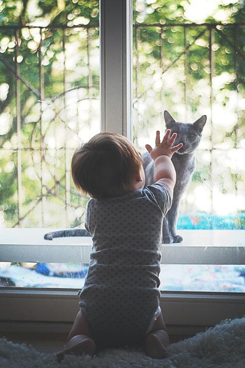 Русская голубая кошка. Фото