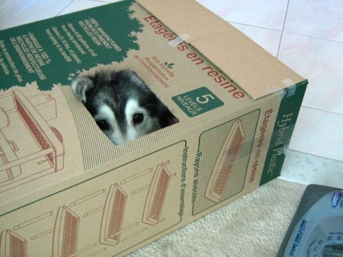 Талли – собака с душой кошки. Фото
