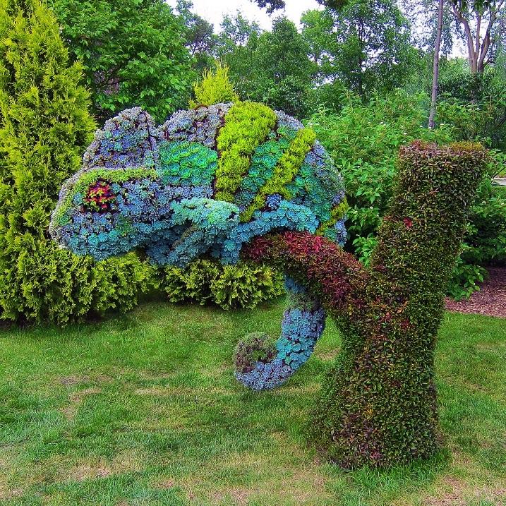 Топиар — зеленое искусство фигурной стрижки. Фото