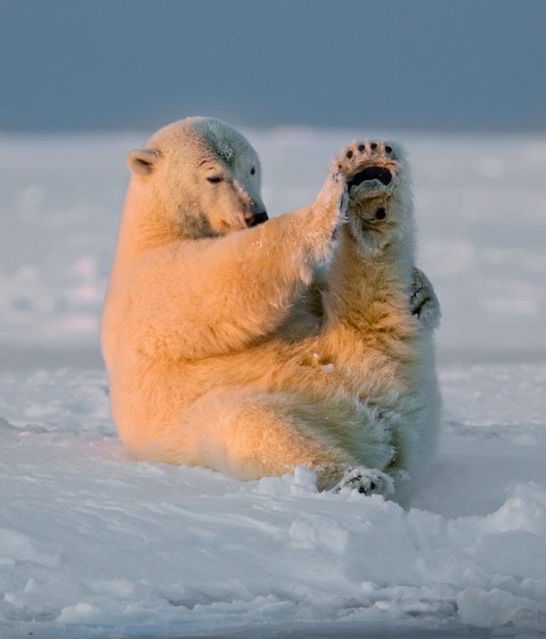 Уроки йоги от медведей. Фото