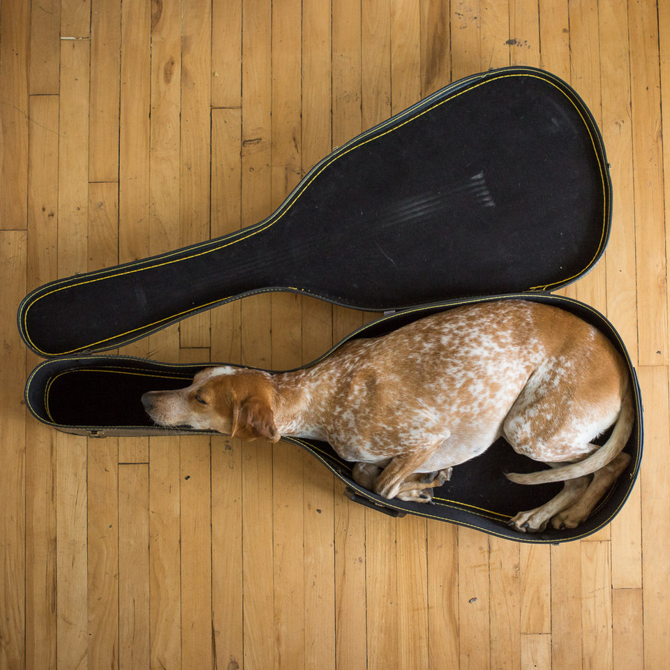 Спящий музыкант. Фото дня
