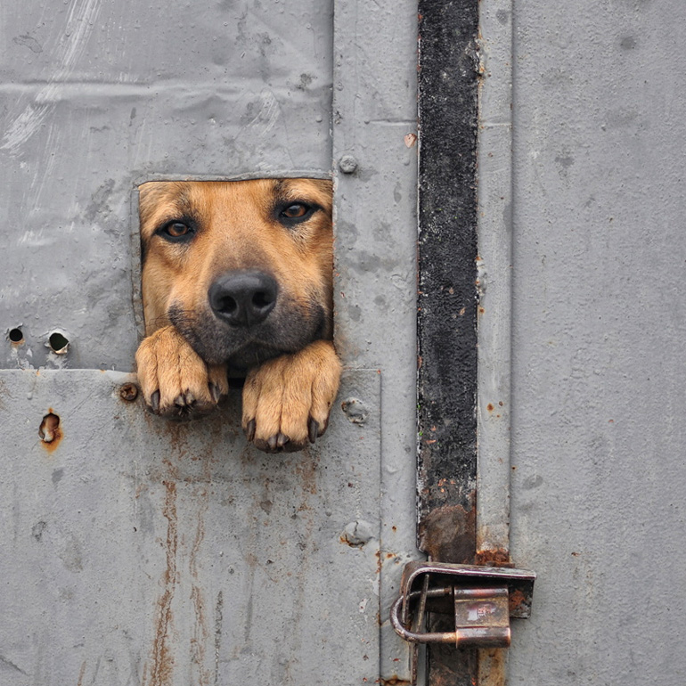 Откройте дверь, пожалуйста, я только на минутку! Фото дня