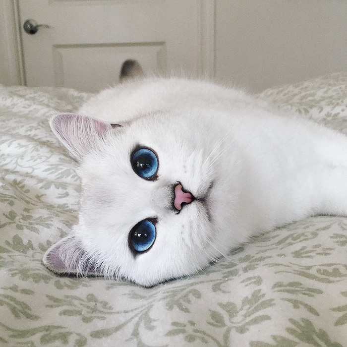 Those eyes are gorgeous !  Cats  Pinterest  Котята