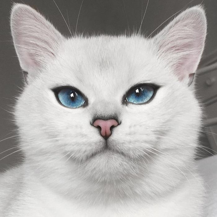 Голубоглазый Коби – самый красивый кот Инстаграма. Фото