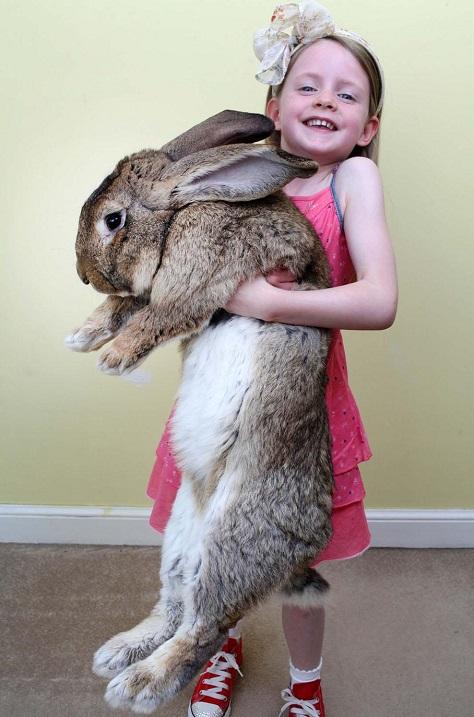 девушка голый кролик с морковкой фото