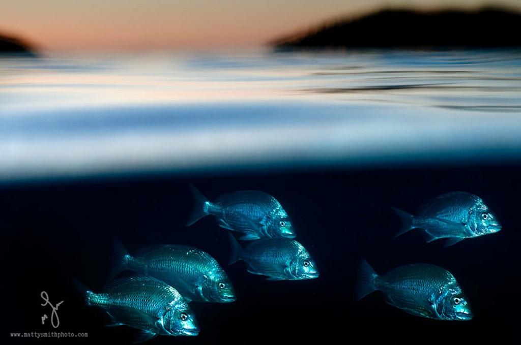 Подводный мир. Фото
