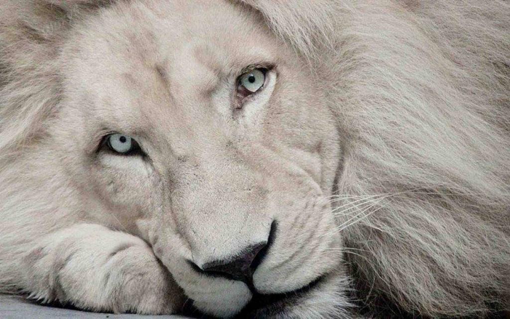 Самые редкие и удивительные животные нашей планеты. Фото