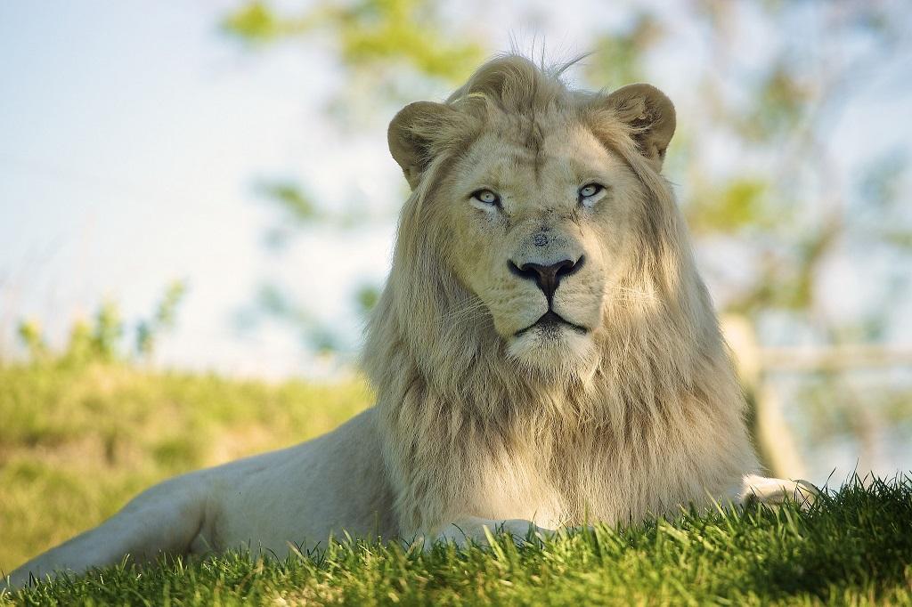 Самые красивыи необычные животные нашей планеты. Фото