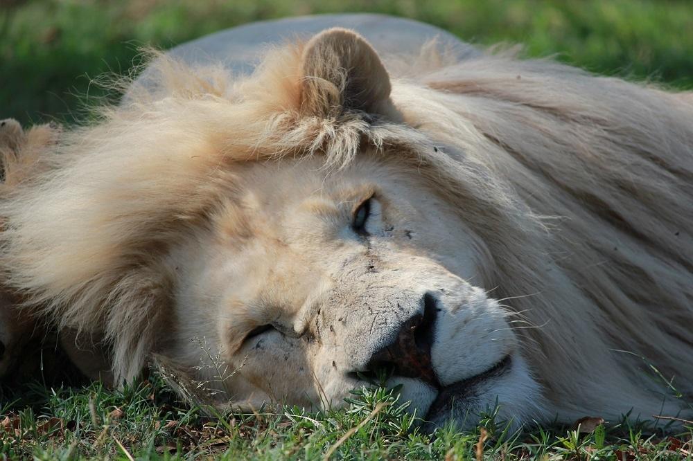 Саыме необычные исчезающие животные Африки. Фото