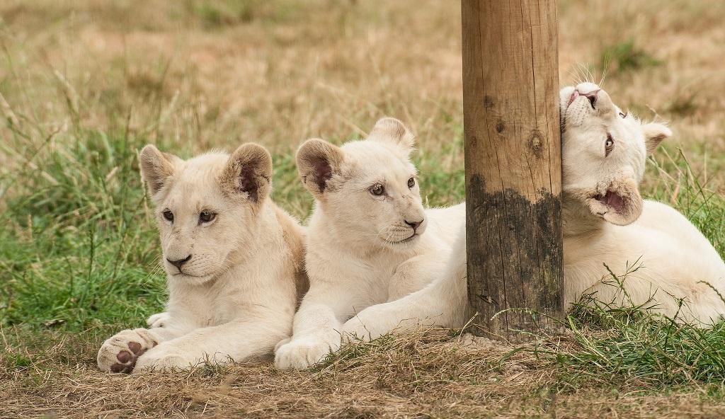 Самые редкие исчезающие животные мира. Фото