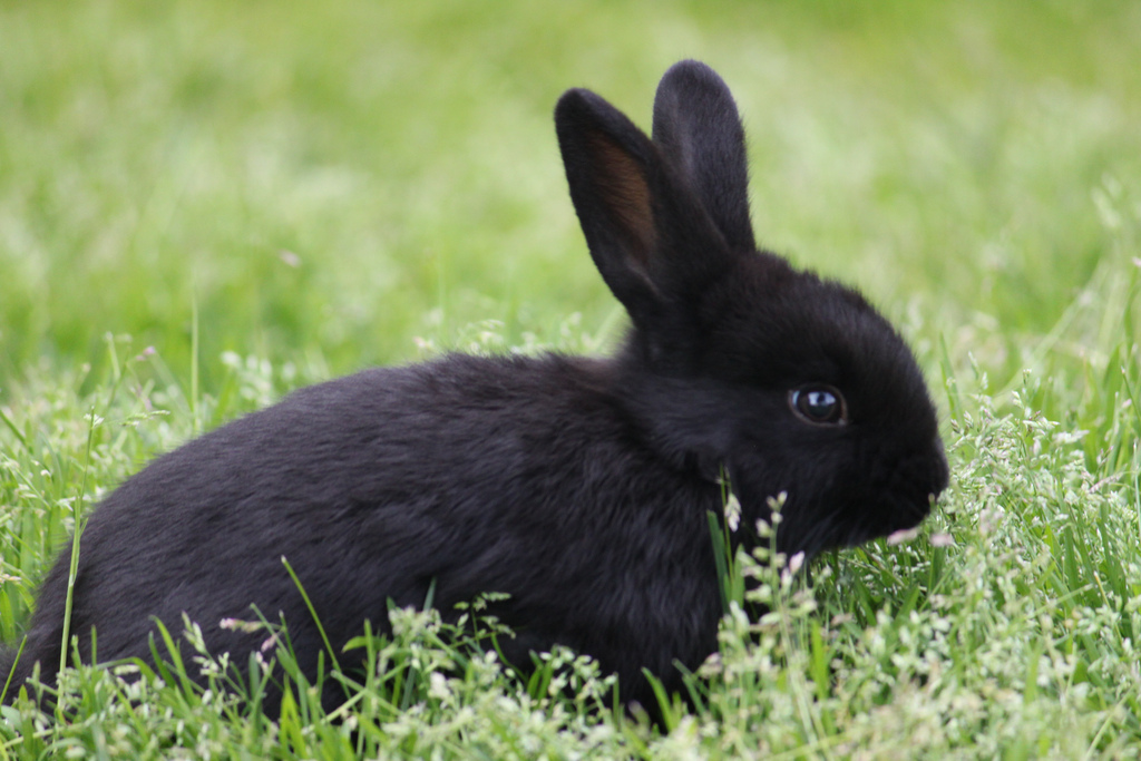 Самые редкие и необычные породы кроликов. Фото