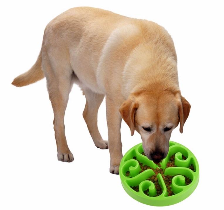 Приспособления для правильного питания собак. Фото