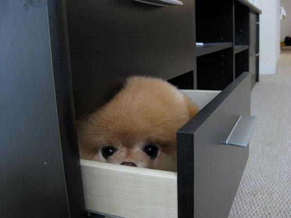 Щенок Бу в ящике. Фото