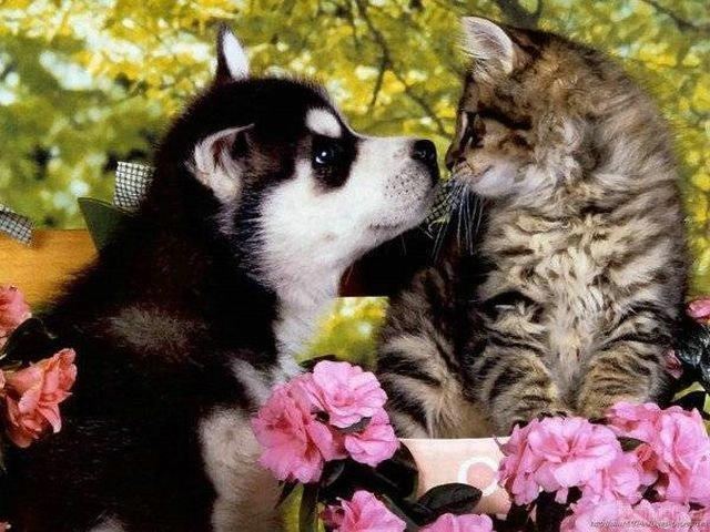 Нежная дружба кота и собаки. Фото