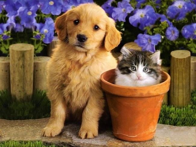 Котенок и щенок - дружная семейка. Фото