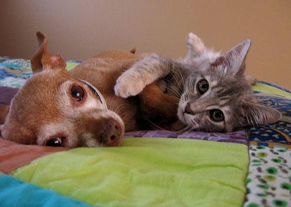 Щенок и котенок обнимаются. Фото
