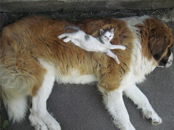 Котенок спит на собаке. Фото