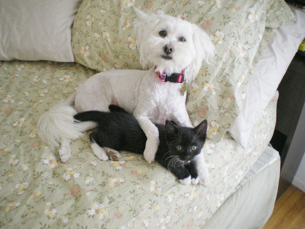 Дружба животных: собачка и черный котенок. Фото