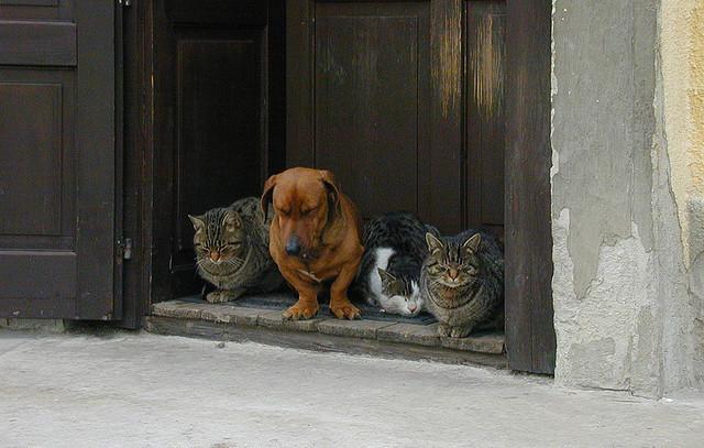 Коты и собака медитируют. Фото
