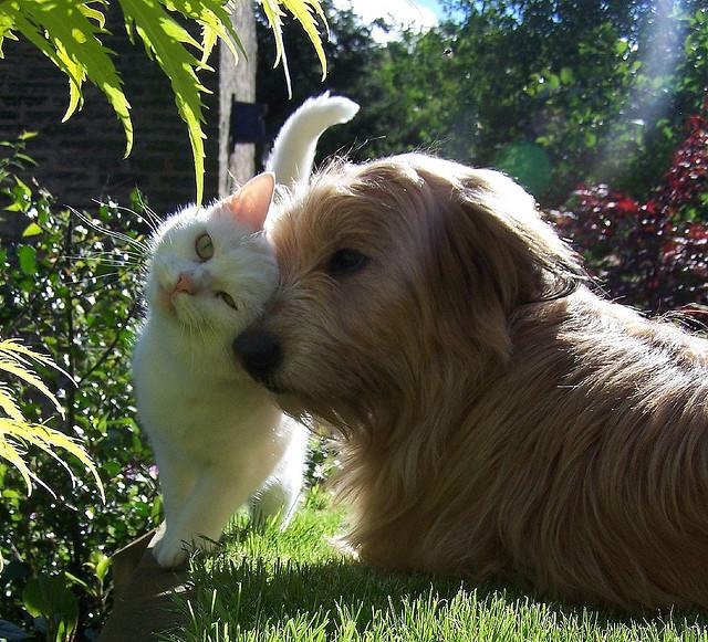 Нежные отношения кота и собаки. Фото