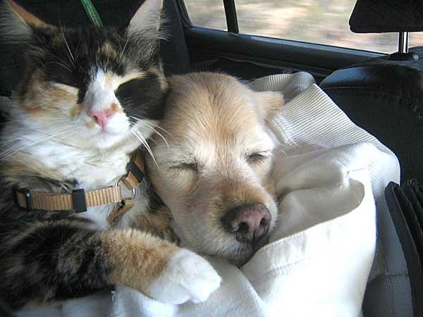 Дружба кота и собаки. Фото