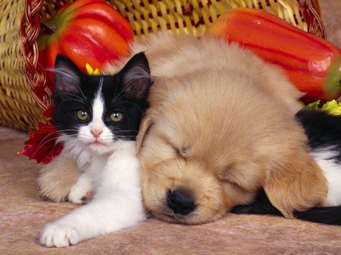 Дружба животных: котенок и щенок. Фото