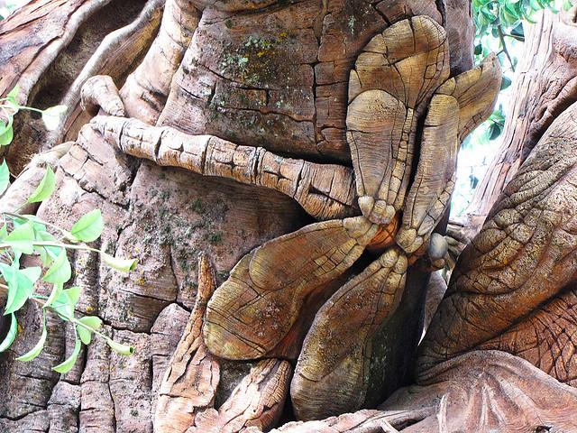 Стрекоза крупным планом на Дереве Жизни. Фото