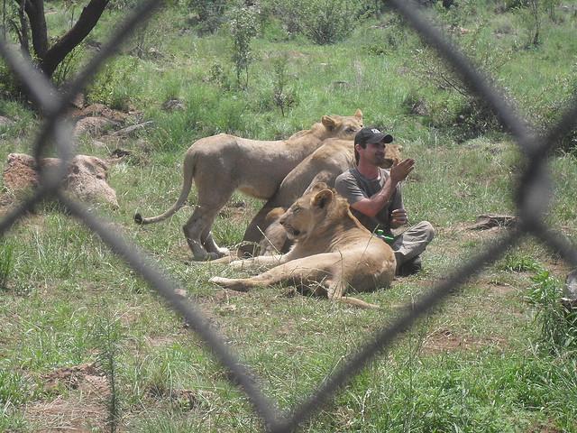 Кевин Ричардсон в заповеднике среди львов. Фото