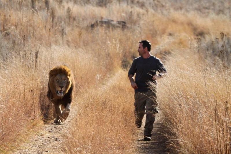 Утренняя пробежка со львом. Фото