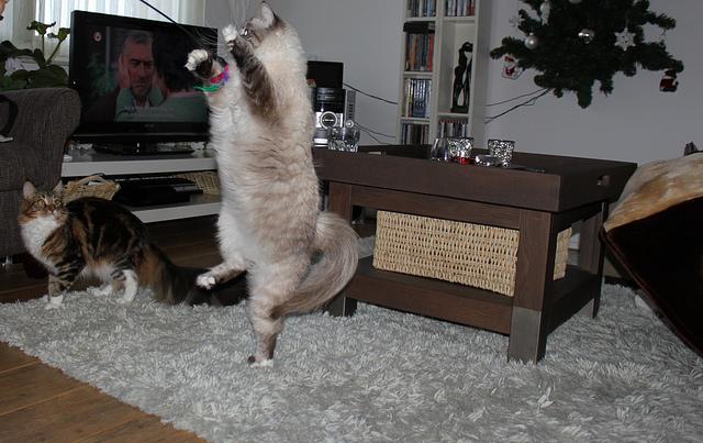 Кот стоит на одной ноге. Фото