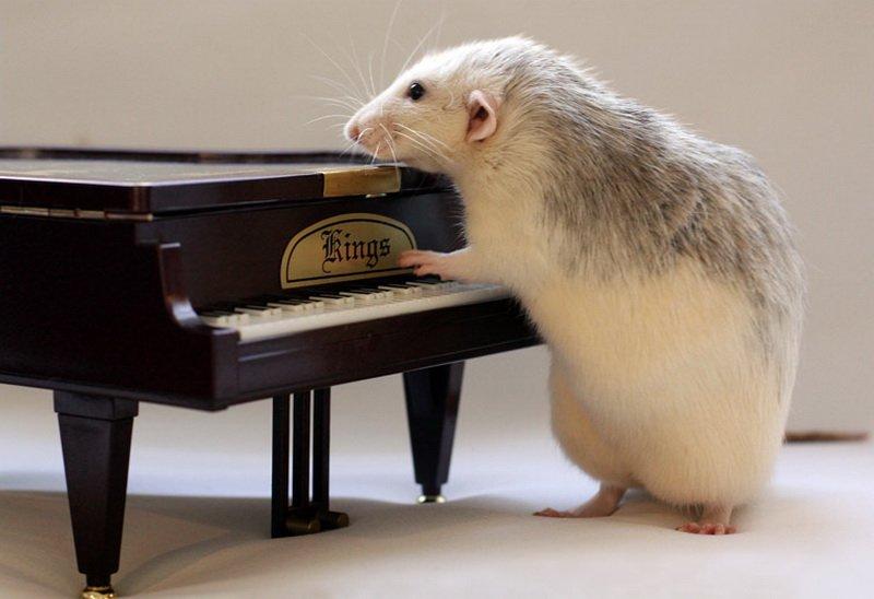Крыса играет на фортепиано. Эллен ван Дилен. Фото