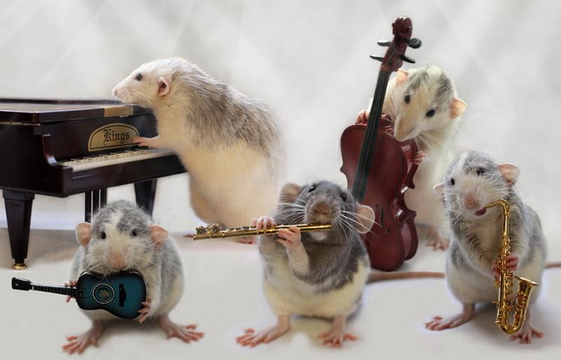 Крысиный джаз-бэнд. Эллен ван Дилен. Фото