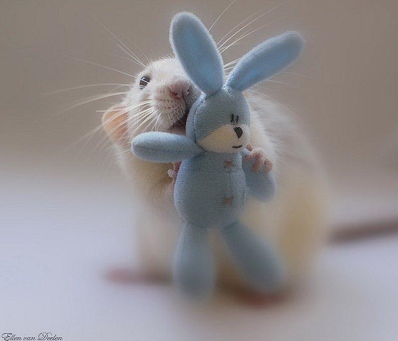 Крыса позирует с зайчиком. Эллен ван Дилен. Фото