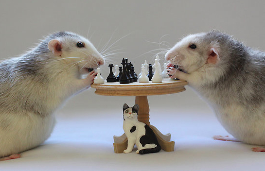 Крысы играют в шахматы. Эллен ван Дилен. Фото